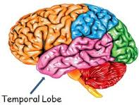 temporal lobe btne kittery